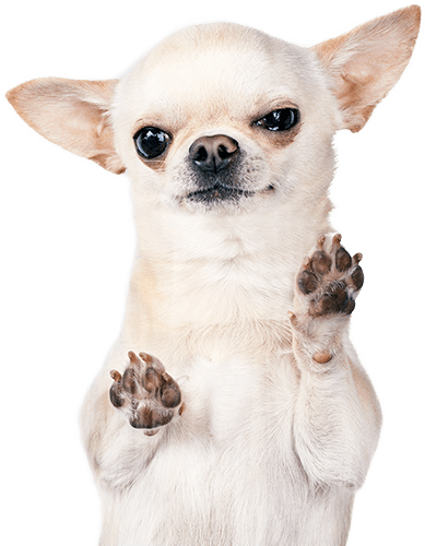 dog holding up it's nails