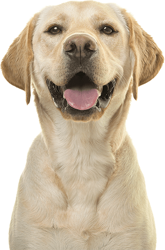 dog smiling into the camera