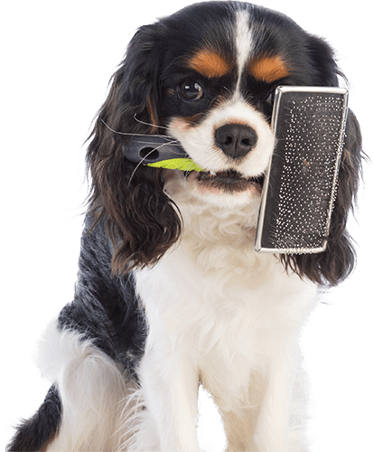 dog with a de shed brush in its mouth
