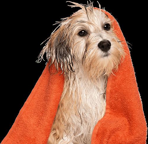 dog with an orange towel around it